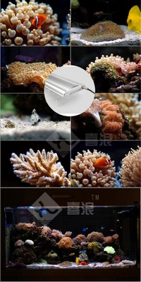 REEF SERIES CREE LED AQUARIUM LIGHTING FROM AQUADESIGN