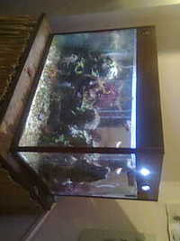 Marine fish tank with built in filter system for Fish tank with built in filter