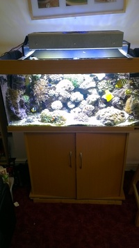 juwel rio 180 with cabinet sump and led light at aquarist classifieds. Black Bedroom Furniture Sets. Home Design Ideas