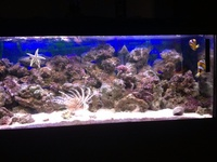 Lionfish for sale
