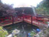 KOI RESCUE IN THE MIDLANDS 50 YEARS EXPERIENCE