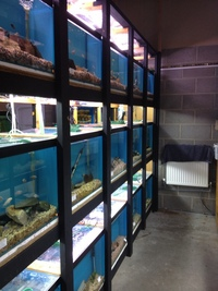 NEW FISH SHIPMENT AVAILABLE TO BUY 1ST DECEMBER