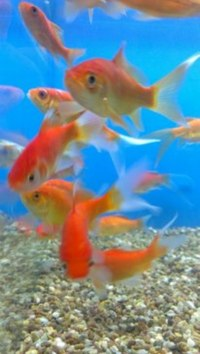 TROPICAL & COLD WATER FISH FOR SALE