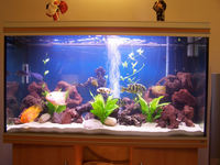 RENA AQUARIUM FOR SALE