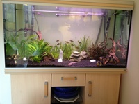 Reduced Rena 360ltr aquarium complete with stand, lights, filters & heaters
