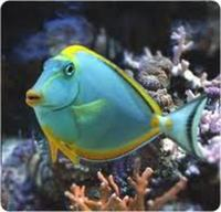 NORTH WEST AQUATICS BOLTON NEW STOCK LIST MARINE FISH & CORALS