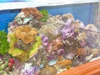 COMPLETE REEF TANK