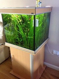 Complete planted tropical aquarium for sale