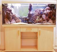 Rena aquarium fish tank complete set up with cabinet 5ft for Aquarium rena