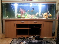 6.5 ft Rena Fish Tank SOLD SUBJECT TO COLLECTION