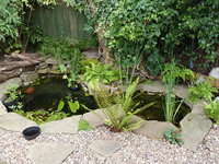 Fish Ponds and Tanks Advice, Design and Maintenance and Supply