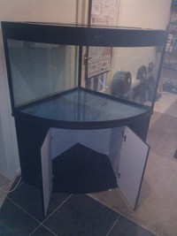 Maple Aquatics Dereham Norfolk