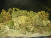 live rock for sale �a kilo