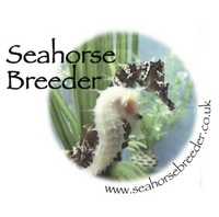 Aquaculture Supplies from Seahorse Breeders online fish breeders shop
