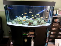 Juwel Vision 260 Bow Front Aquarium With Cabinet and Lots of Extras Just Add Fish �0 ono