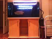 Rena Aquarium 4ft 360litres + Fluval 304 filter REDUCED