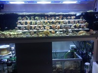 Lots of sps, lps and soft corals available from recent tank closures.