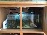4x2x2 fish tank on real oak stand with 3ft sump