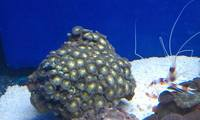 marine corals / inverts & fish for sale cheshire