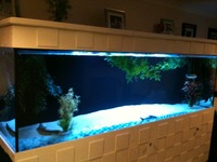 Very large aquarium for sale at aquarist classifieds for Tall fish tanks for sale