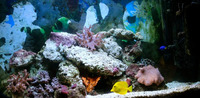 Marine Tank with Rock/Sand/Fish/Equipment