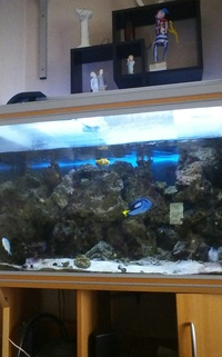 rena complete marine set up 250 ltr