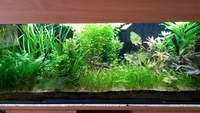live tropical fish and plants for sale in Brentwood, Essex