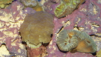 Marine fish, Inverts and Corals in Ayrshire