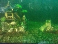 5ftx2ft Fish Tank and extras