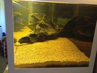 48in x 12in x 11in fish tank for sale. �