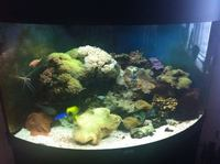 Complete Marine Tank For Sale