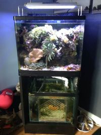 full marine set up with marine livestock