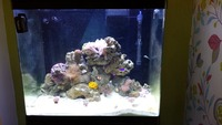 Red Sea Max 130 for sale - with marine livestock