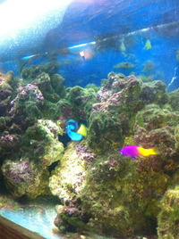 Live rock and marine fish in 4ft Marine Tank