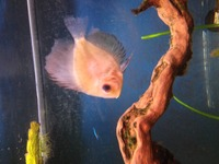 3 discus for sale, near Chipping Norton, �0 ONO