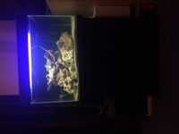 Tropical fish tank 140L and external filter malawi cichlid mbuna ocean rock