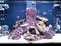 Aqua one AquaReef 300 Litre marine aquarium – full setup £800