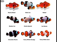 WHOLESALE MARINE FISH, CORAL , FRESHWATER FISH, KOI, AQUATIC LISTS FOR IMPORT OF FRESH WATER MARINE FISH & CRITTERS AQUARIUMS TANKS LISTS