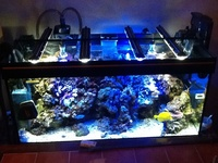Full marine fish tank with corals, inverts , some fish �0