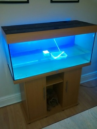 RIO 180 BEEN USED FOR MARINE TANK, YELLOW TANG, YELLOW FOXFACE MARINE FISH