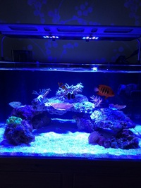 Tmc signature 600 aquarium, maxspext razor 120w and lots more