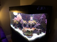 Red Sea Max 250 plus full marine set up - �0 ono