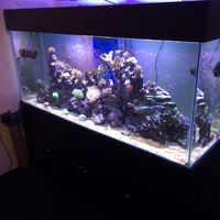 Complete large salt water (marine) set up 6x3x2 top spec equipment