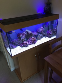 200L Marine Fish Tank incl stand, all equipment and livestock ...just plug it in