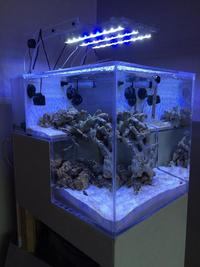 the NANO REEF DROP aquarium