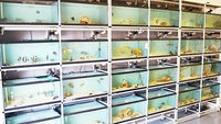 New Delivery of over 250 Marine Fish - Bradford, West Yorkshire