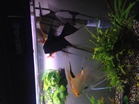 Tropical fish and plants for sale