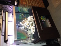 fluval osaka 260 at aquarist classifieds