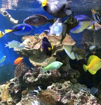 Marine Fish For Sale - Closing Down Large Tank