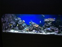 £ 2750. - SEABRAY Full Mature Reef Set-up. 1200 litres